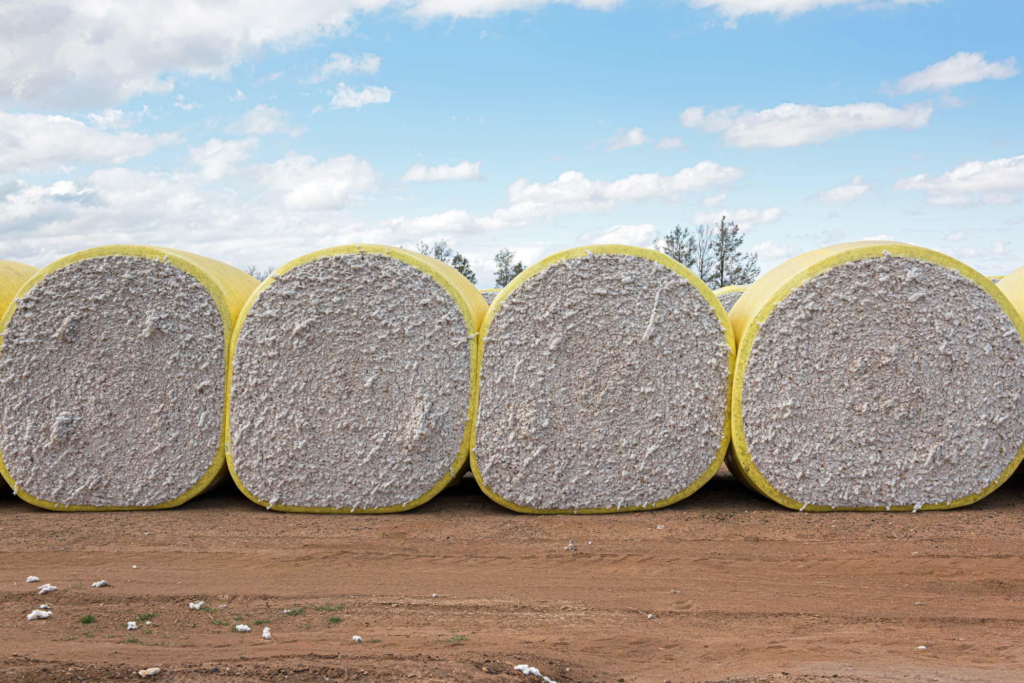 Baumwollproduktion