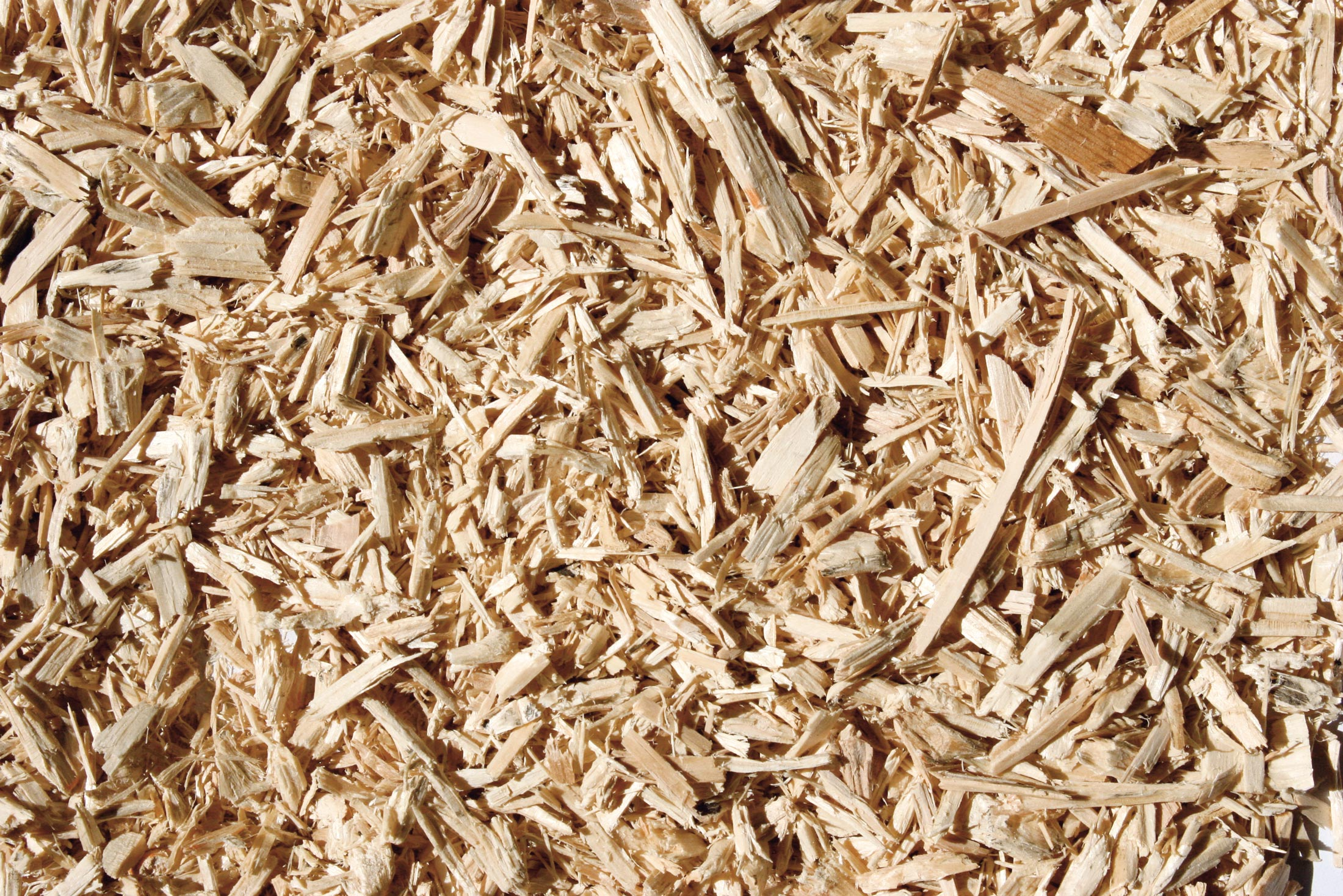 Wood chips before briquetting