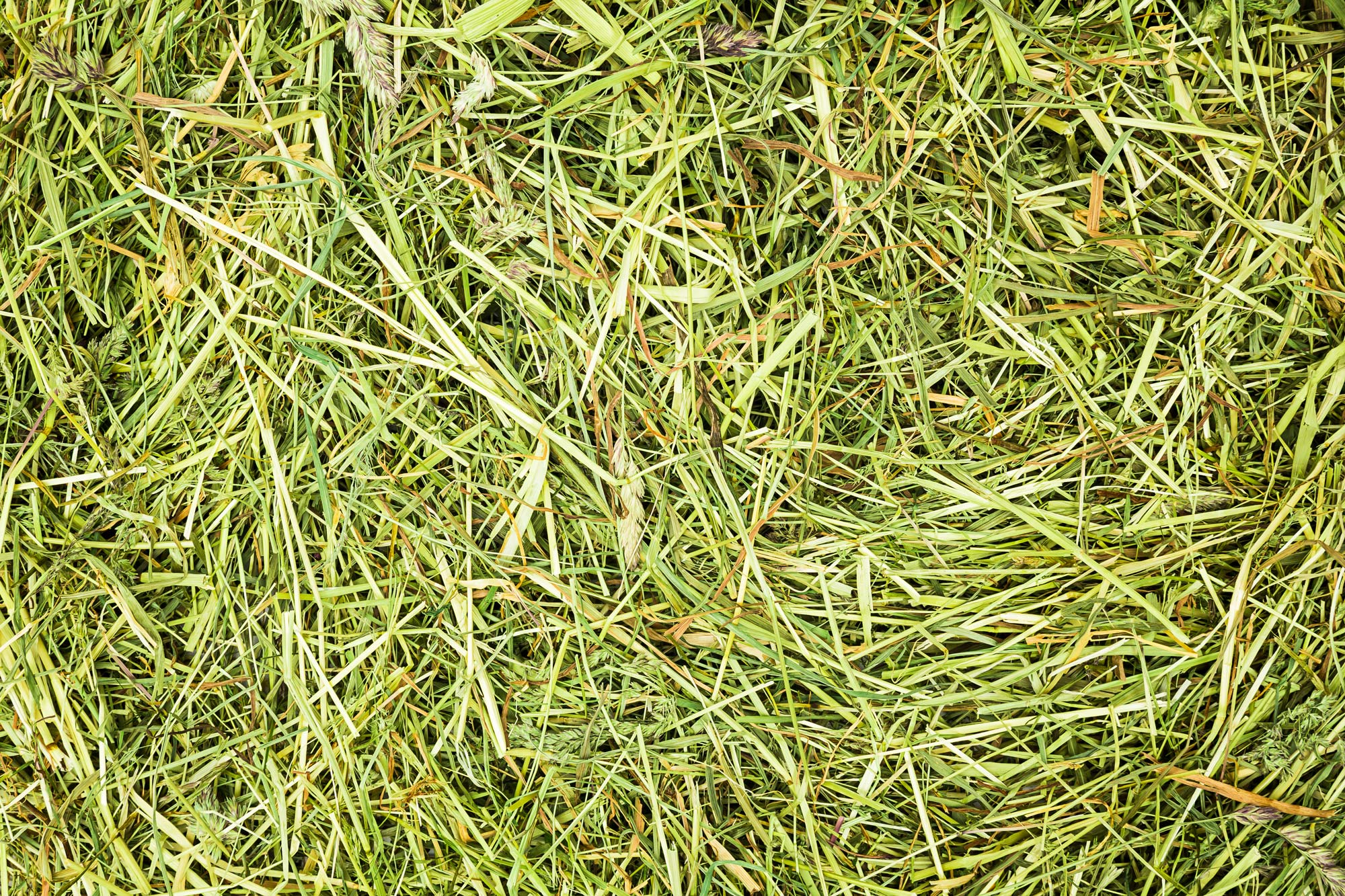 Hay before briquetting