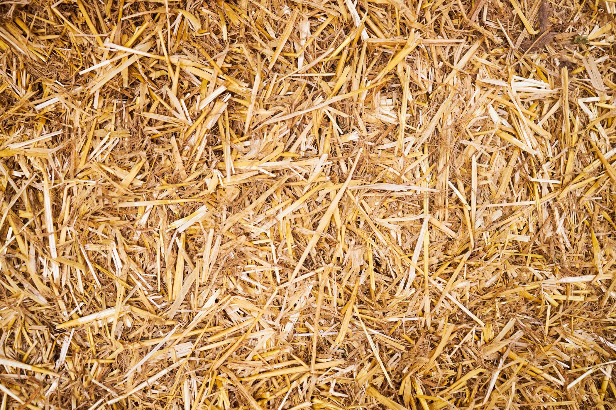 Getreide wie Weizen, Hafer und Gerste vor der Brikettierung
