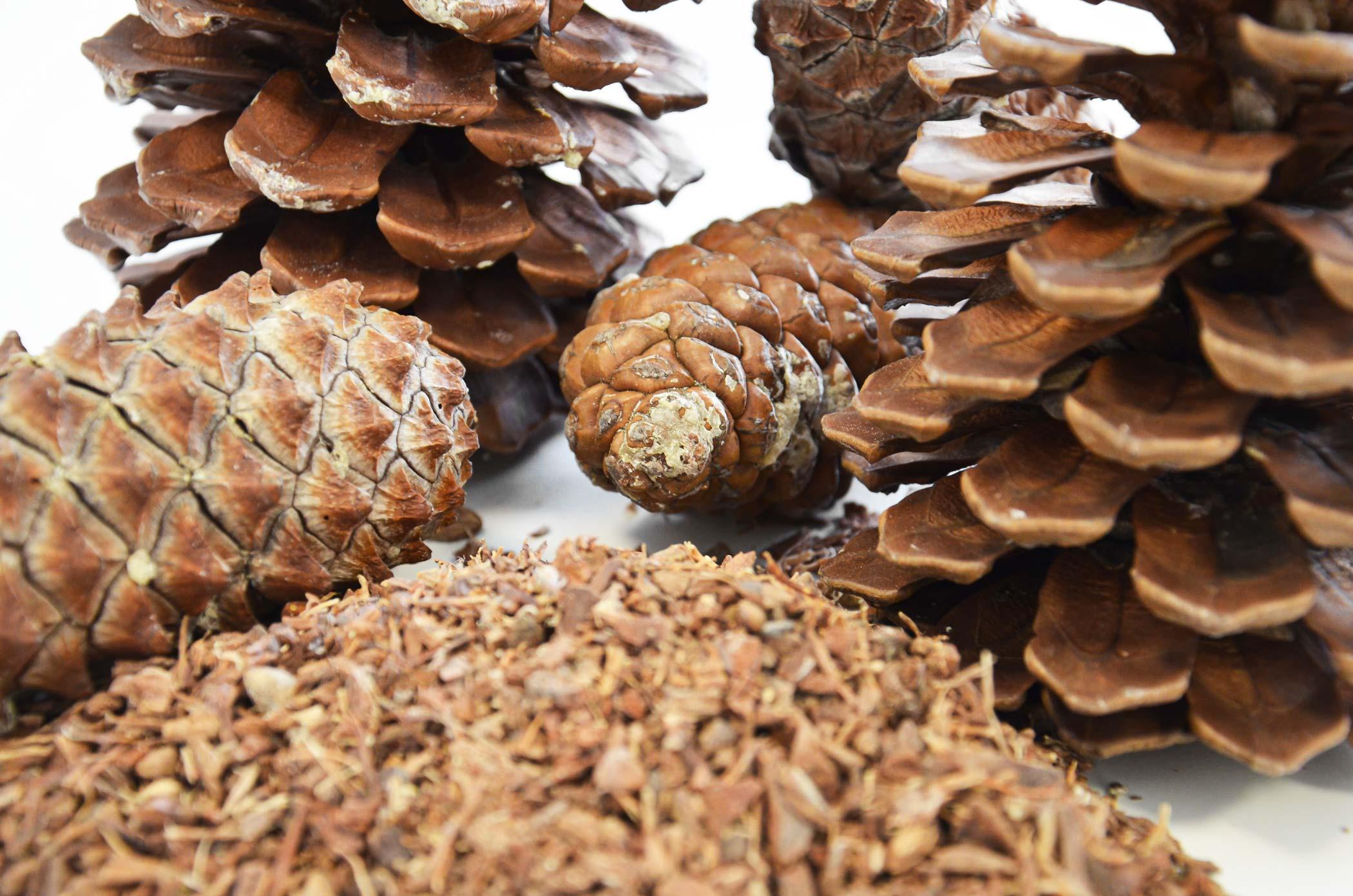 Pine cones before briquetting