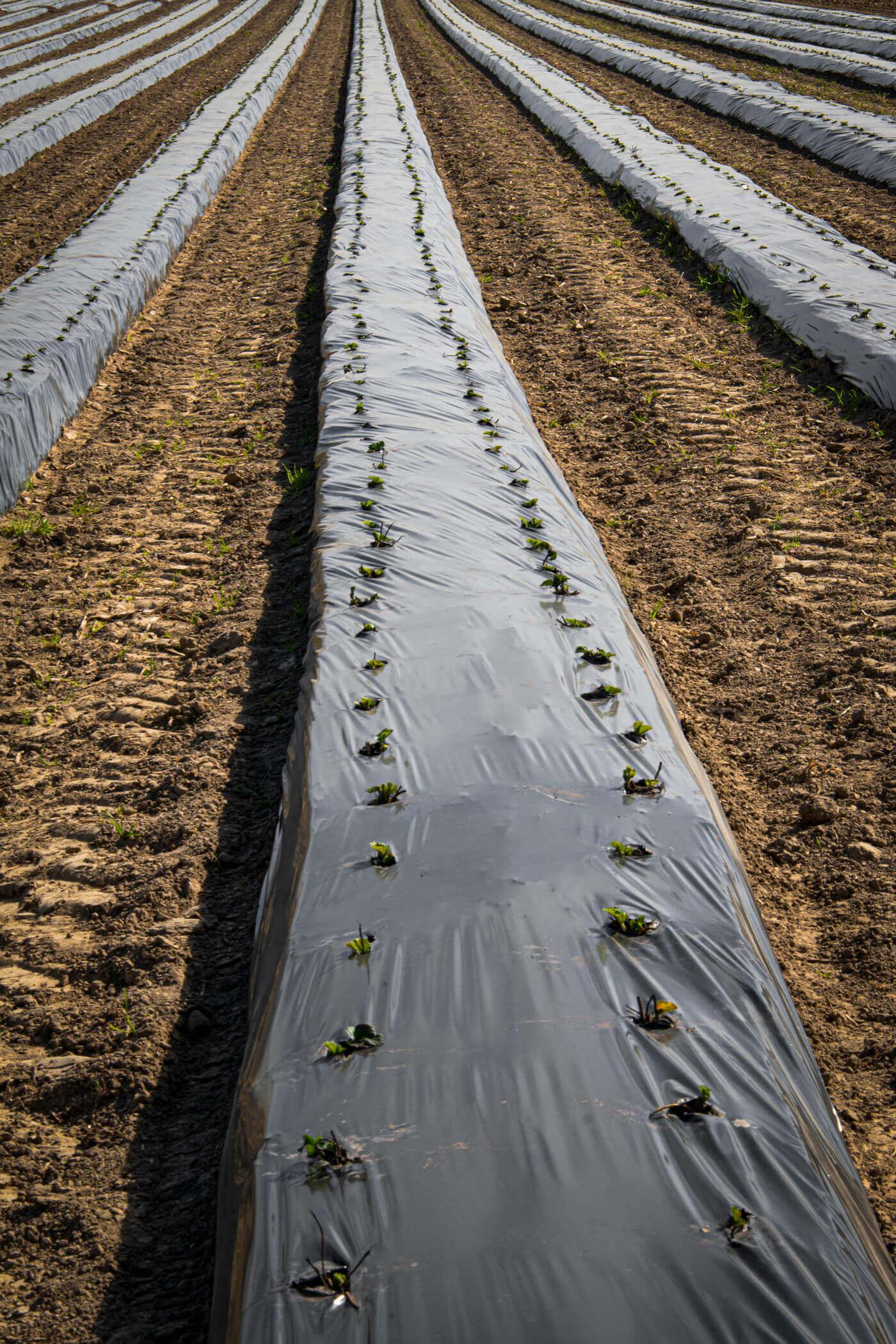 Gemüsefolie Agrar