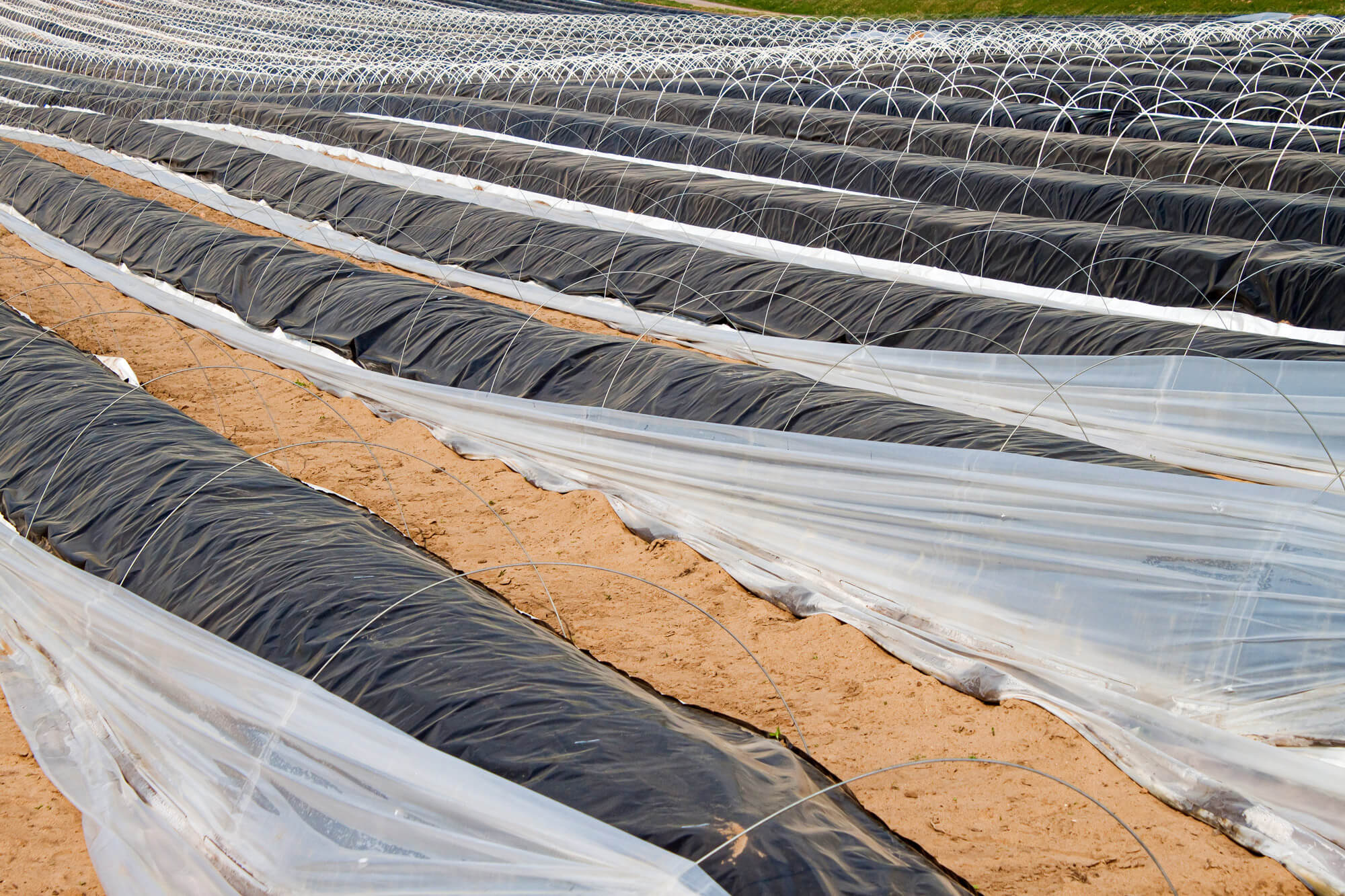 Feldfolie für den Agrarbetrieb