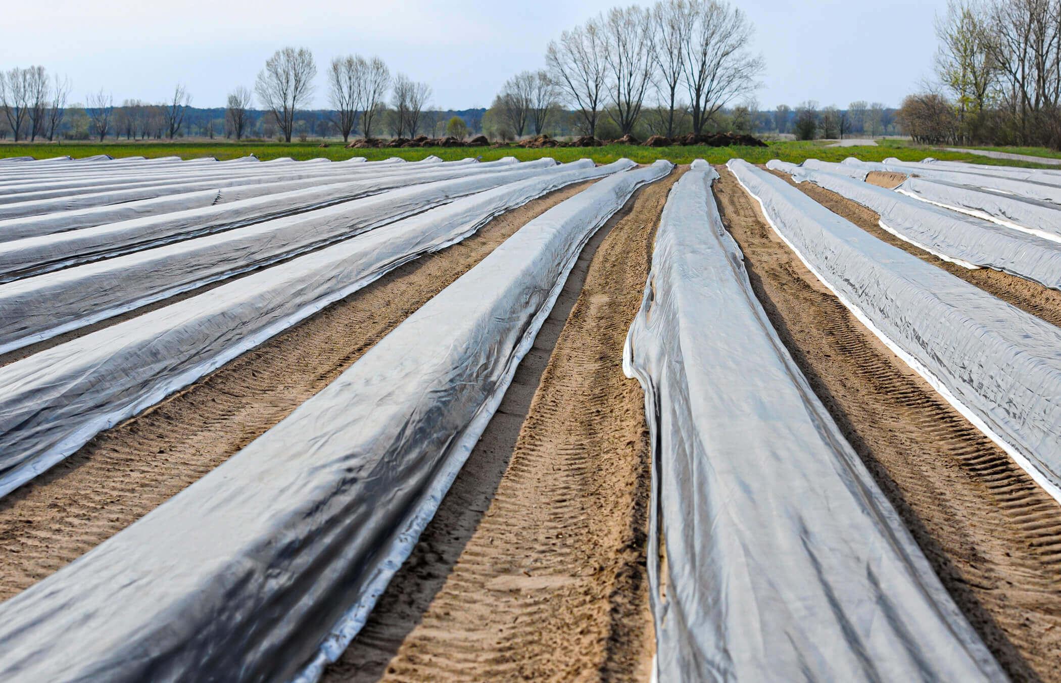 Spargelfolie Kunststoff auf dem Feld
