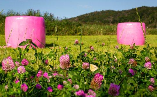 Landwirtschaftsballen in Wickelfolie auf einer grünen Wiese