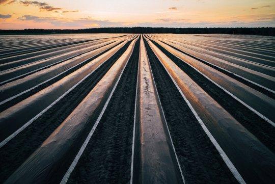 Spargelfolie und Champignonfolie in der Landwirtschaft auf deutschen Ackern