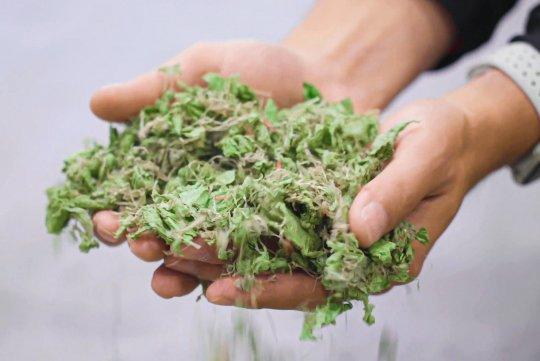 Geshredderte Erntekunststoffe in den Händen